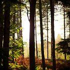 Nature's breath by martine fitchett