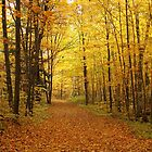 Tree Alley into the Fall by Alinka