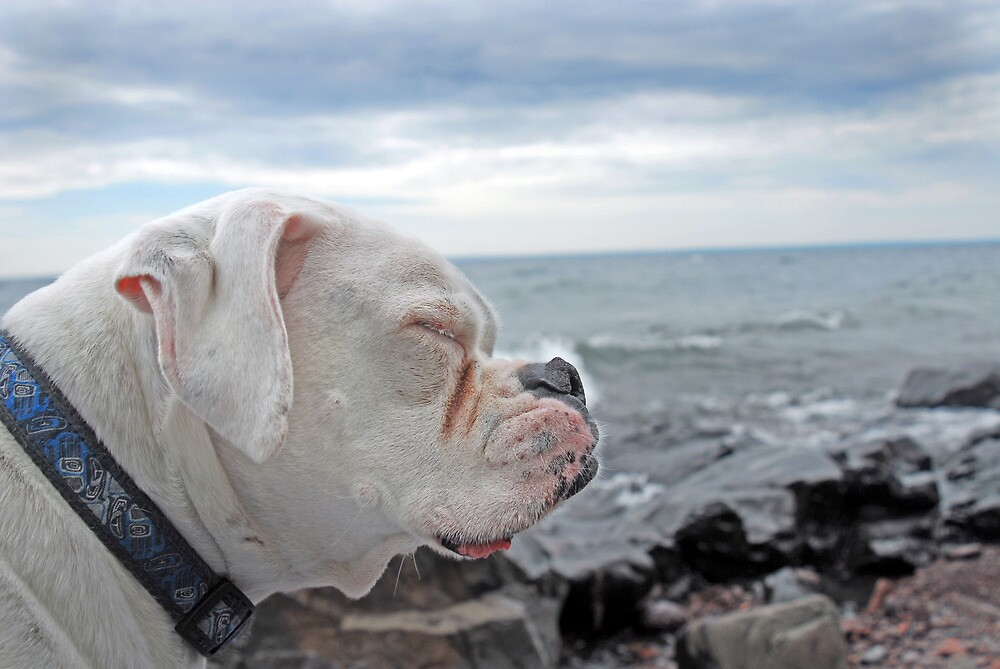 Kota Enjoying the Beach by Aaron Bottjen