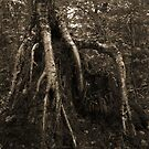 Tall Roots by Aaron Bottjen