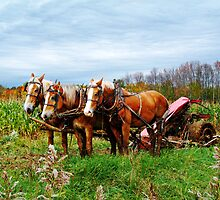 Serious Horse Power by Marcia Rubin