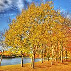 Colour in the Park by Hertsman