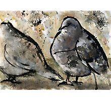 Pigeons #2 Photographic Print