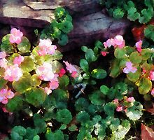 Begonias By Stone Wall by Susan Savad