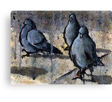 Pigeons #4 Canvas Print
