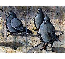 Pigeons #4 Photographic Print