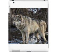 gray wolf  iPad Case/Skin