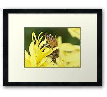 Autumn Honey Bee Framed Print