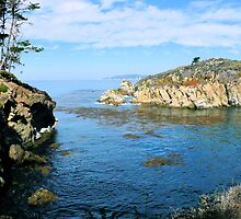 #1067  - Cove At Point Lobos by MyInnereyeMike