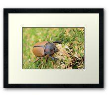 Beetle on Grass Framed Print