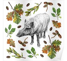 Wild boar with oak leaves Poster