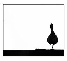 Duck on a Fence 1 by Su Walker