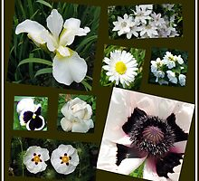 White Summer Flowers Collage by BlueMoonRose