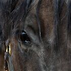 Beautiful Horses Eye by Toots2