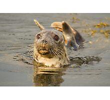 Grey Seal Photographic Print