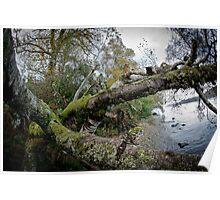 Loch Ness Shoreside Poster