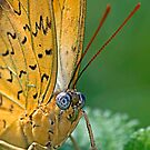 Julia Butterfly by Henry Jager