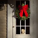 Winter - Christmas - Clinton, NJ - Christmas puppy  by Mike  Savad