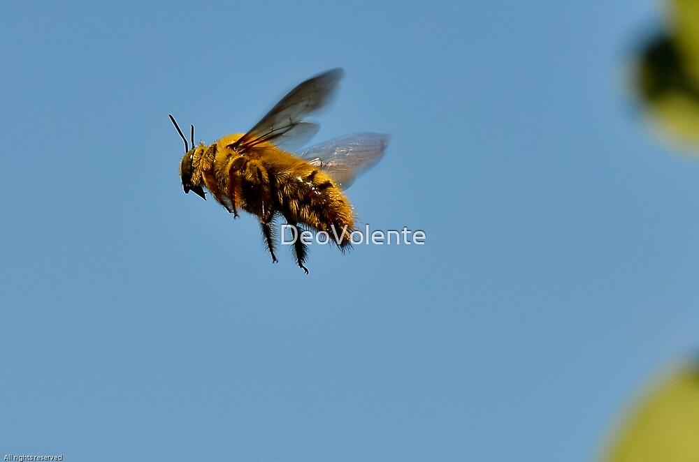 Carpenter Bee by DeoVolente (Dewahl Visser)