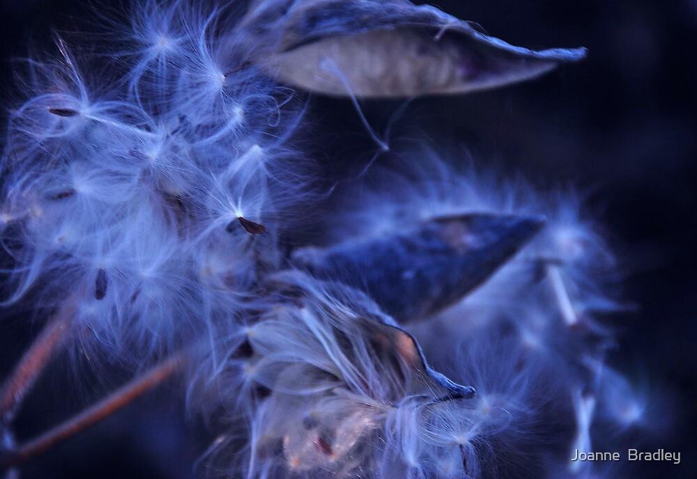 Whispers by Joanne  Bradley