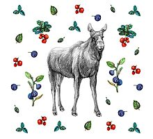 Moose with berries Photographic Print