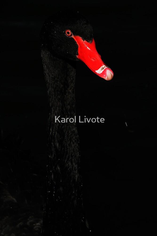 Almost Hidden by Karol Livote