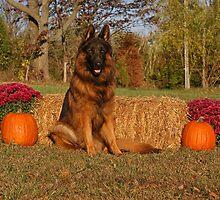 Hoss in Autumn II by Sandy Keeton