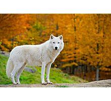 Arctic Fall  Photographic Print
