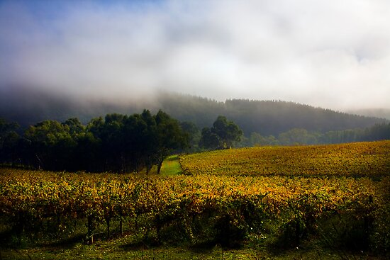 Vineyard Adelaide Hills in Autumn by Gerijuliaj