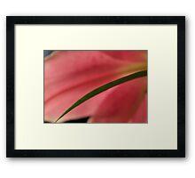 Soft Pink Lily 3 Framed Print