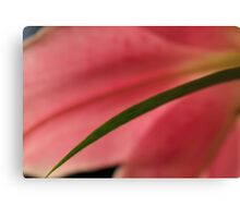 Soft Pink Lily 3 Canvas Print