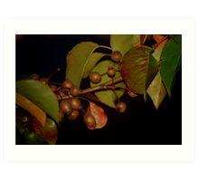 Bradford Pears Art Print