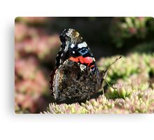 A Red Admiral Butterfly Canvas Print