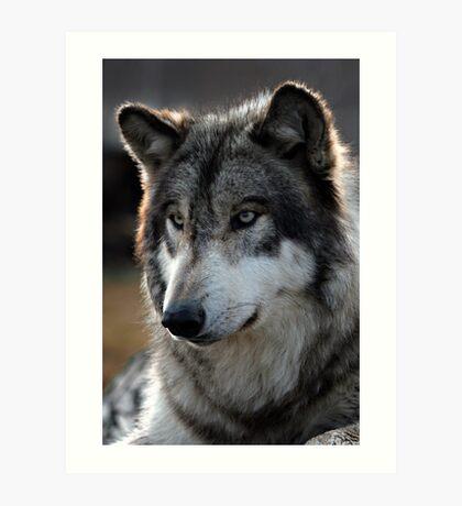 back light wolf Art Print