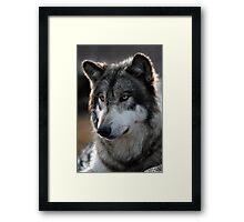 back light wolf Framed Print