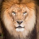"""Mane Attraction"" - closeup of male lion by ArtThatSmiles"