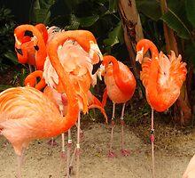 Caribbean Flamingo by PaulineHoward