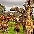 Giraffic Park by TonyCrehan