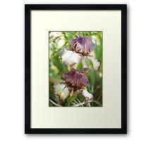 Iris 4 2011 Framed Print