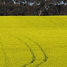 Tracks in Canola  by ROSEMARY EAGLE