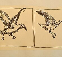Four flying Seagulls: pen sketch. by Elizabeth Moore Golding