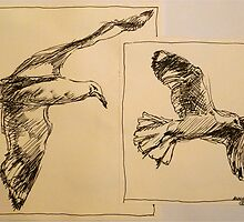 Two flying Seagulls: pen sketch. by Elizabeth Moore Golding