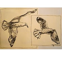 Two flying Seagulls: pen sketch. Photographic Print