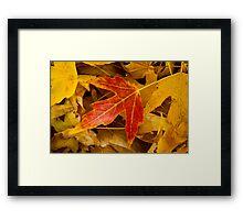 Red Maple Leaf Framed Print