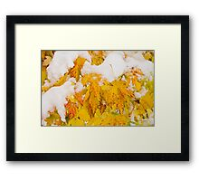 Fresh Snow on Colorful Autumn Leaves Framed Print