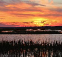 Sky Over The Marsh by Cynthia48