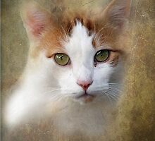Feral Cat by Bine