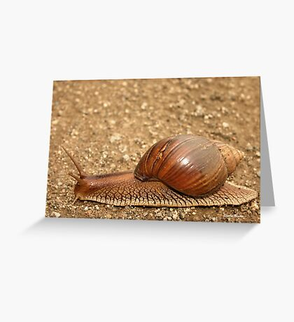 Giant land snail, Achatina achatina, South Africa - Lowveld Greeting Card