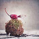 Bed of moss by Priska Wettstein