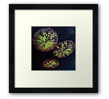 Water Lily Leaves Framed Print